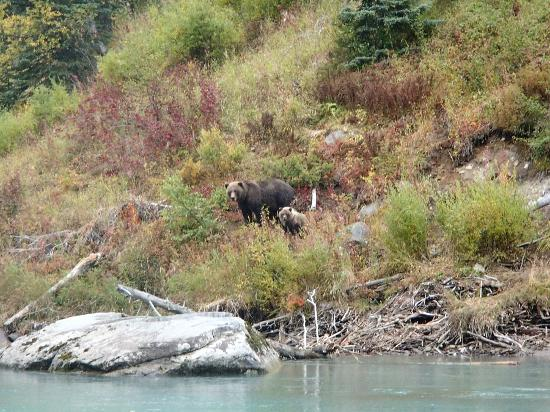 Tower Rock Lodge: Bears seen on our fly out