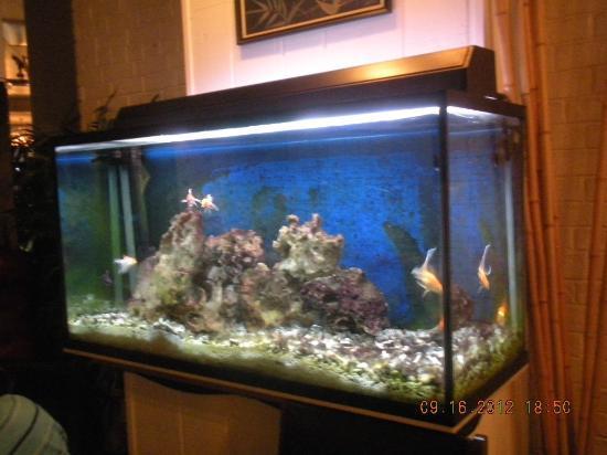 Aquarium picture of le petit saigon victoria tripadvisor for Petit aquarium