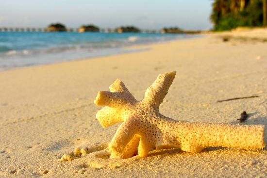 Gili Lankanfushi Maldives: scenic beach