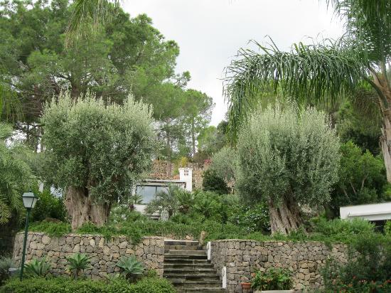 Garden & Villas Resort: gli ulivi