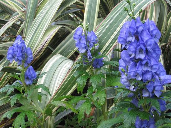 Arduaine Garden: Late September perennials