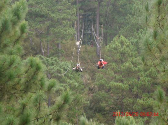 The Manor at Camp John Hay: Tree Top