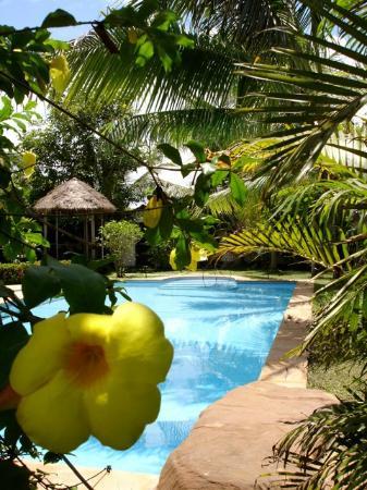 La Palmeraie d'Angkor: The swimming pool.