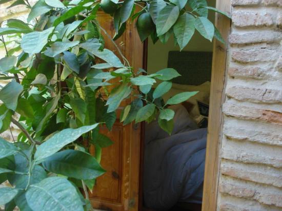 Riad Hidden : Vue sur la chambre