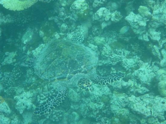 Soneva Fushi : Snorkeling trip