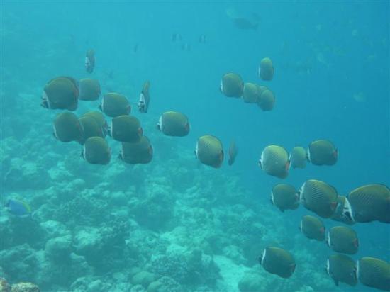 Soneva Fushi : Snorkeling at housereef
