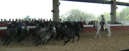 Jerez De La Frontera, Spain: Yearlings in mad free face around arena