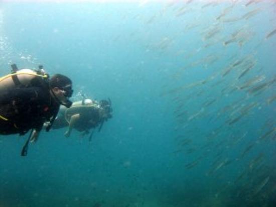 CSI: SAMUI Dive School : Diving with CSI Samui