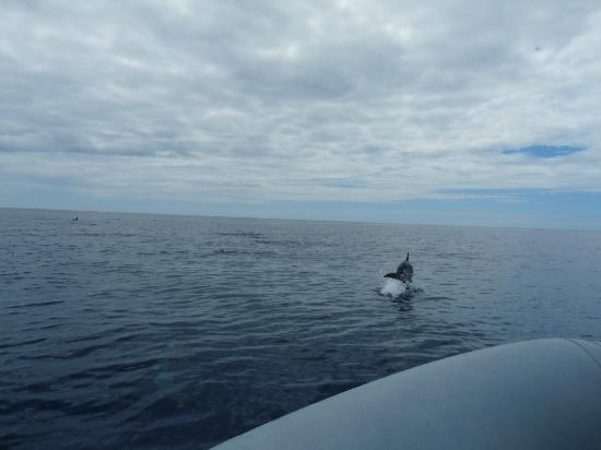 Pestana Bahia Praia: jumping whale