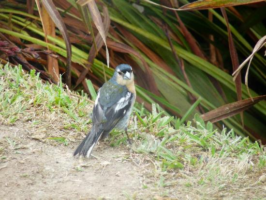 Pestana Bahia Praia: rare local bird