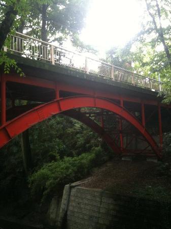 Todoroki Valley: 入口付近からゴルフ橋を撮影