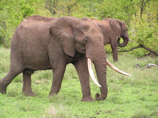 Arimagham Guest House: Kruger Park on our Doorstep