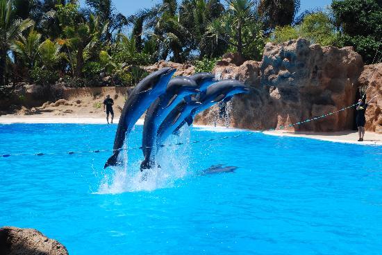 Los delfines picture of loro parque puerto de la cruz tripadvisor - Loro parque puerto de la cruz ...