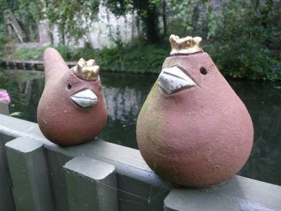 Huis Koning: terrace king robins