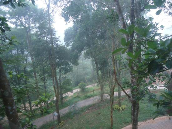 Vythiri Village: View from the Bedroom