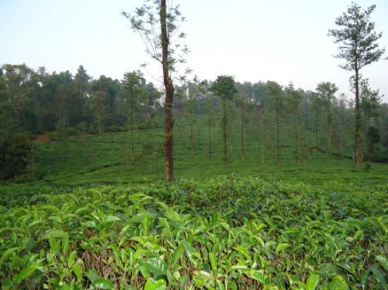 Vythiri Village: View near the room door