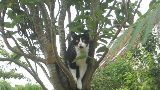 Le Chateau de Sully : surprise dans un des arbres!!