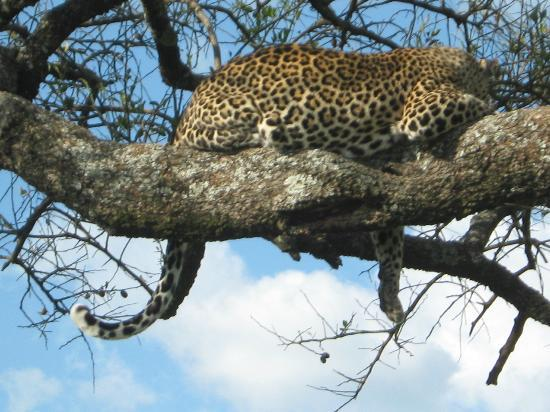 Kıyı İli, Kenya: kenya safari watamu