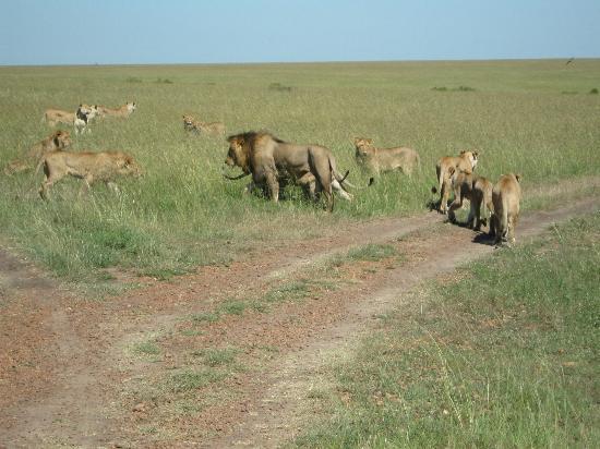 Coast Province, Κένυα: kenya safari watamu