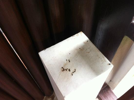 Bhundhari Spa Resort & Villas Samui: Bird excrement on balcony.