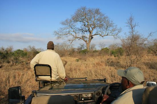 Vuyatela Lodge & Galago Camp: Game Drives