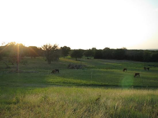 Foothills Safari Camp at Fossil Rim: Sunset