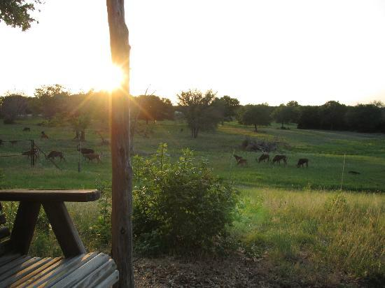 Foothills Safari Camp at Fossil Rim: sunset at the safari camp