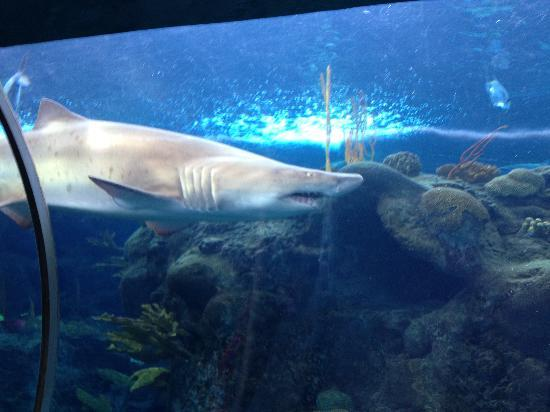 Large Aquarium Picture Of The Florida Aquarium Tampa