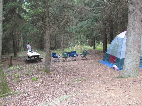 Allegheny National Forest: Campsite #13