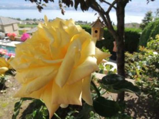 Bella Luna bed and breakfast: ThuBa's Roses