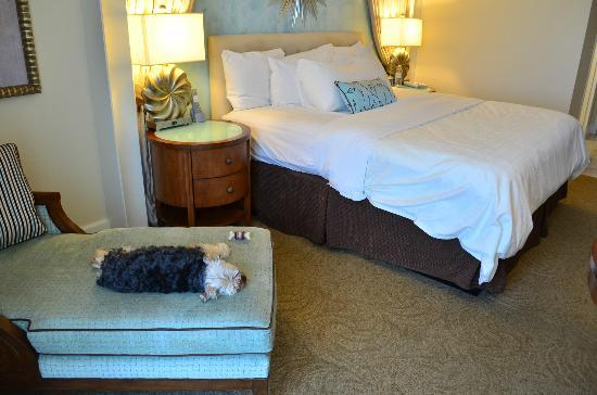 One Ocean Resort & Spa : Pet friendly hotel