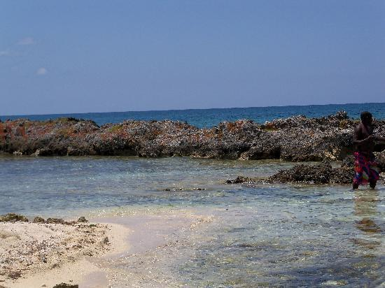 Booby Cay Island: reef