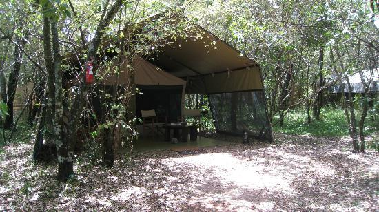 Mara Bush Camp: The tent