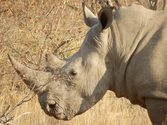 Greenfire Game Lodge : Rhino