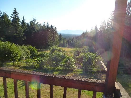 Cedar Springs Bed & Breakfast: View from room