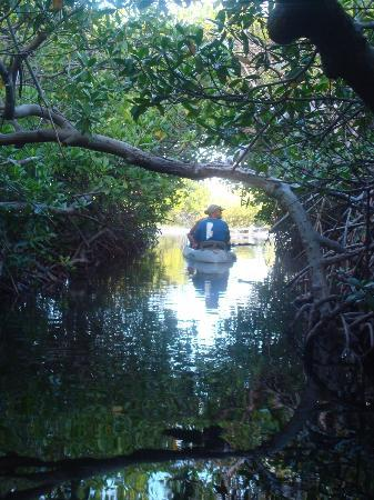 "Outdoor Bonaire: Bonaire mangroves ""canal """