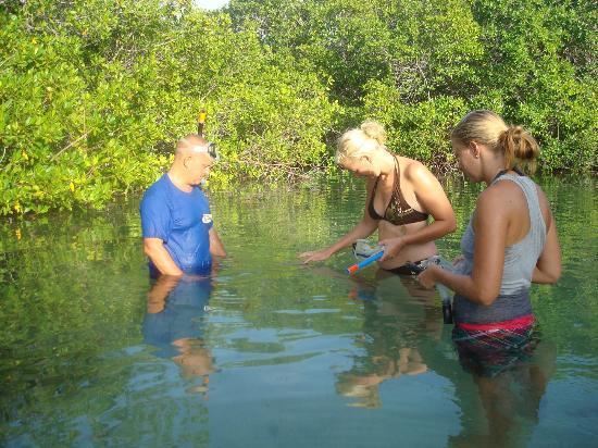 Outdoor Bonaire: See the amazing underwaterworld of Bonaire's Mangroves