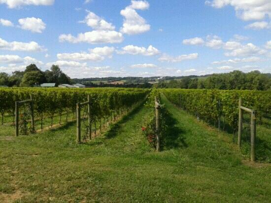 Boordy Vineyards: never thought i would find a great winery in maryland!