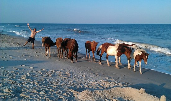 National Park Service Camping Wild Horses On The Beach