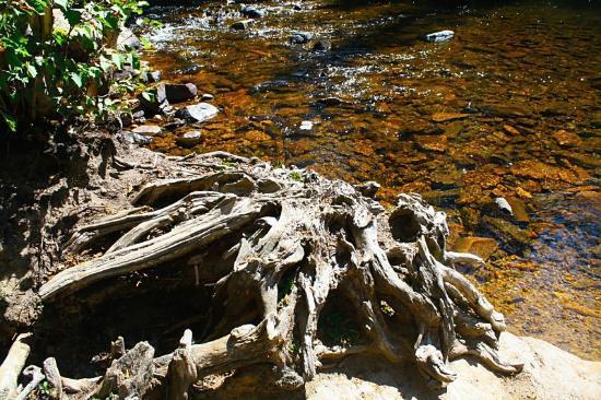 Adams Falls Trail: Pretty!