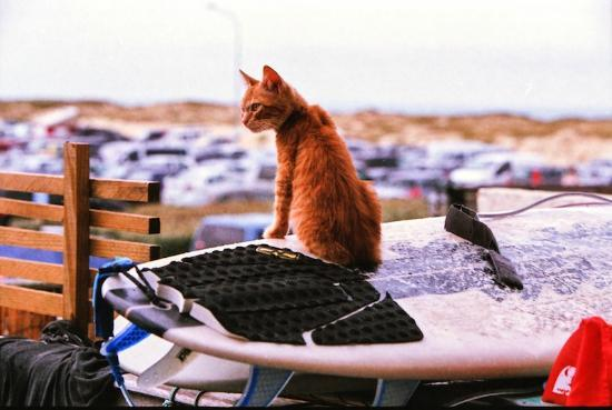 Le Surfing: The resident cat, 'Flea', keeping an eye over the carpark.