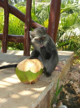 Baobab Beach Resort & Spa: monkey
