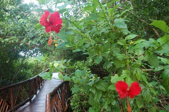 Occidental Cozumel: Mangrove