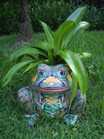 Occidental Cozumel: Frog Planter