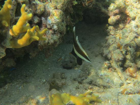 كورو سان ريزورت: great snorkelling! 