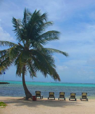 Grand Caribe Belize Resort and Condominiums: The beach