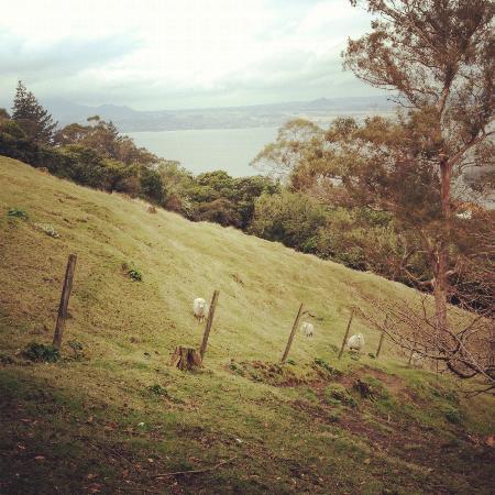 Acacia Cliffs Lodge: Pet sheeps