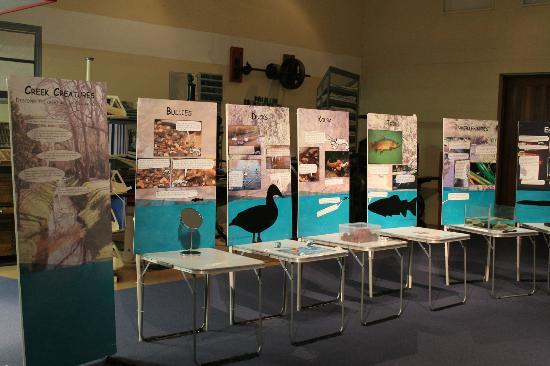 North Otago Museum: A temporary exhibition, Creek Creatures