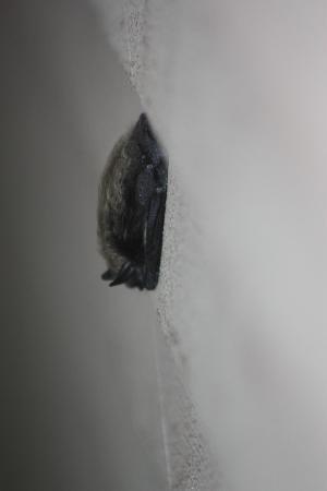 La Quinta Inn Sandpoint: Bat 'hanging' around outside room