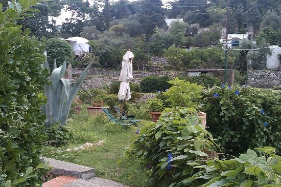 Hotel La Reginella: giardino